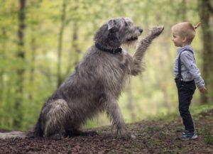 деца, кучета, домашни любимци